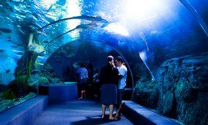 IG-A-Aquarium-O_SiamOceanWorld_003-500x300