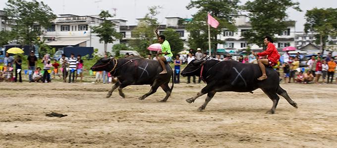 Buffalo-Racing-Festival_02-680x300