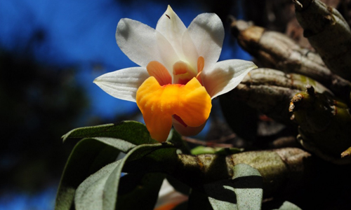 Asia-Pacific Orchid Conference 02